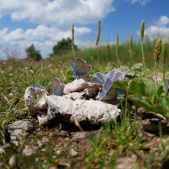 Motýli na plesnivém hovně