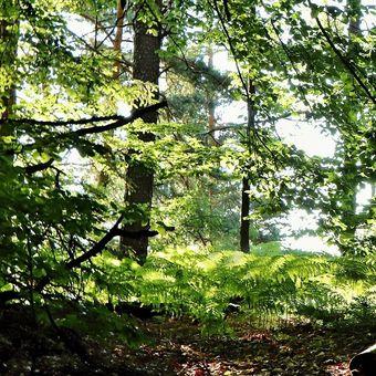 ...lesní kouty....
