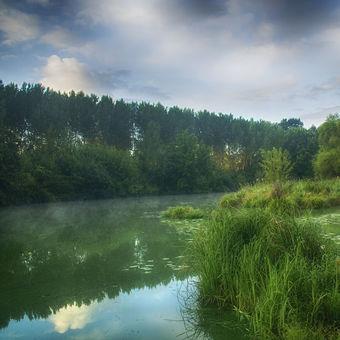 Letní ráno u řeky