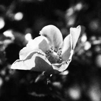 černobílé zrno,  úmysl
