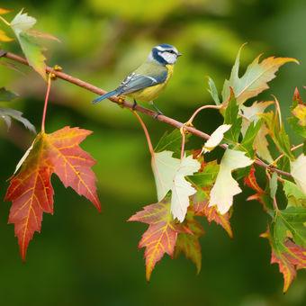 Podzimní větvička ...