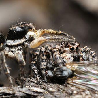 Pavoučí namlouvání :-)