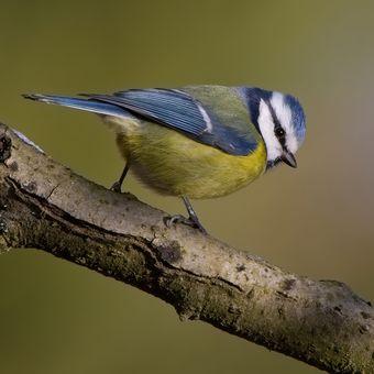 Jeden pohled stačí z perspektivy ptačí