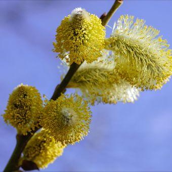 Jaro alergiků