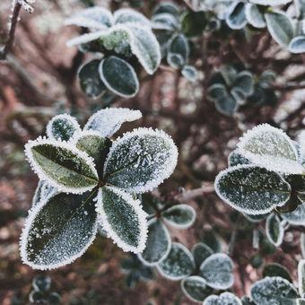 Kouzelná zima.