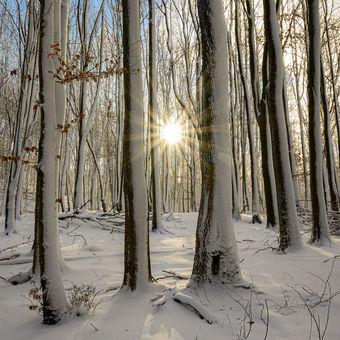 Konečně bílá zima