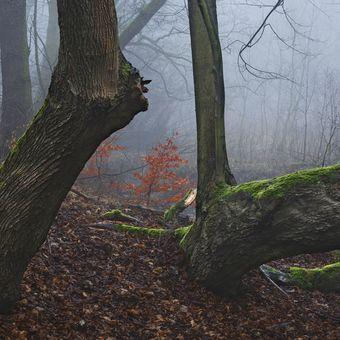 Odpočívající les