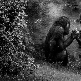 Z pražské zoo...