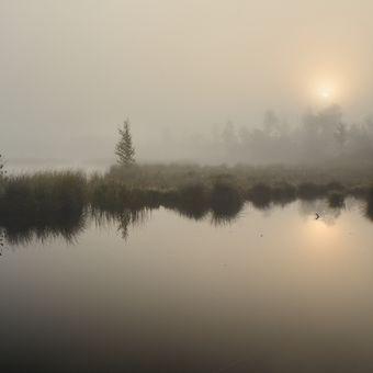 Ráno na Chalupském jezírku