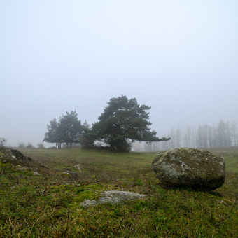 mlžné pastviny