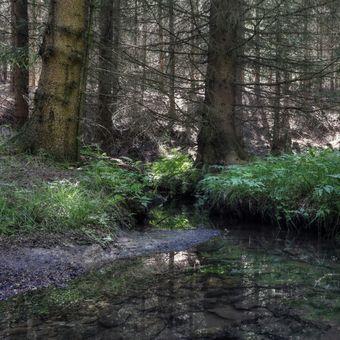 Bezejmenný lesní potůček ...