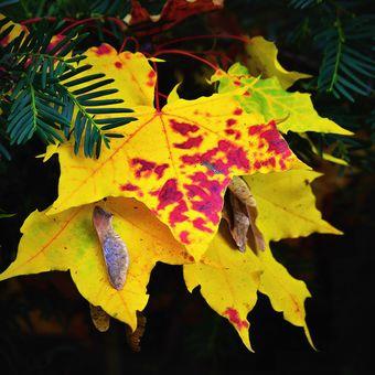 Barevnost podzimu