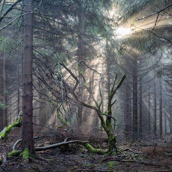 Horským lesem