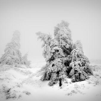 Bílá zima (Jeseníky)