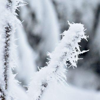 mrzne až praští