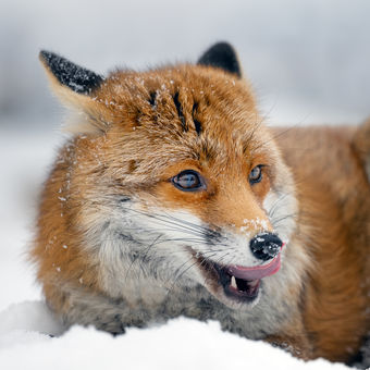 Radost ze sněhu