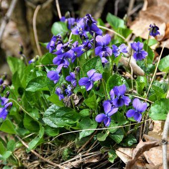 Jarní kvítí
