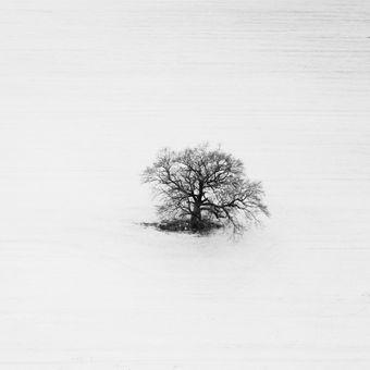 Strom a nič