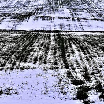 Grafika zimního pole