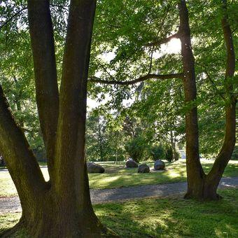 Kameny v parku