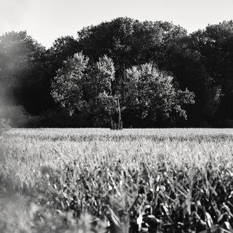 Ze série - Strážce pole