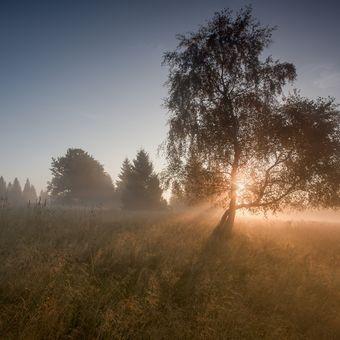 svítání na Zhůří