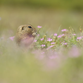 Snídaně v trávě