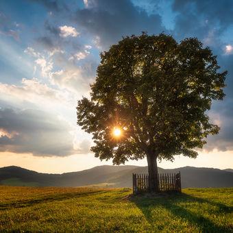 Slnko a strom...