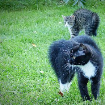 ...či a či a čičiči, to jsou kluci kočičí.....