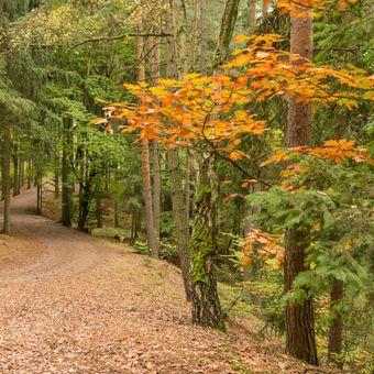 podzimní toulání