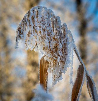 Zimní krása.