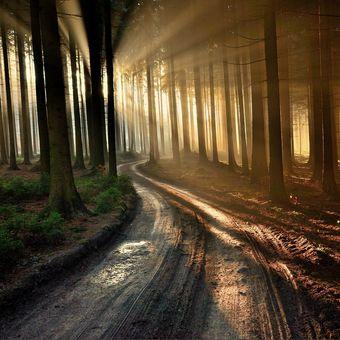 Světlo v lese