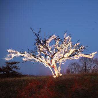 Burning tree 2