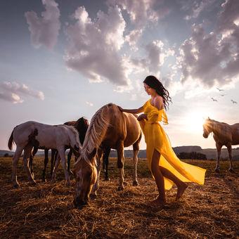 Západ u koní