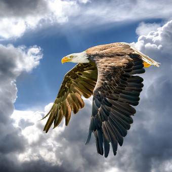 Na křídlech fantazie...