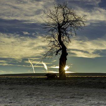 Za stromem