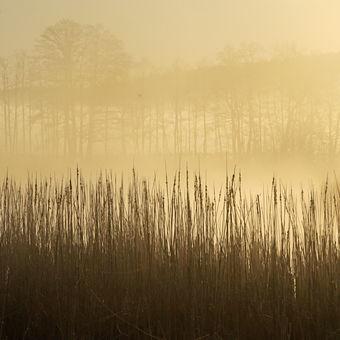 Ráno v přírodě