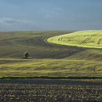 Jarní pole