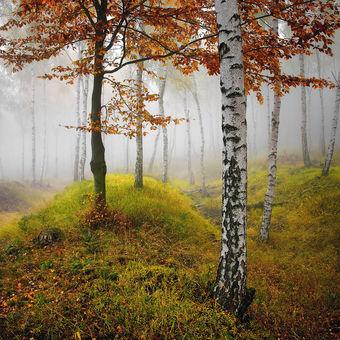 ...tajemné lesy Krušnohorské V.