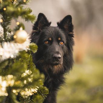 Brix a Vánoce