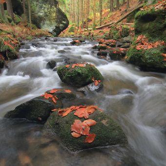 Podzimní Křinice