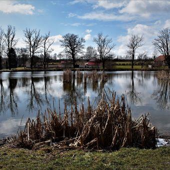 Dopolední klid u rybníka