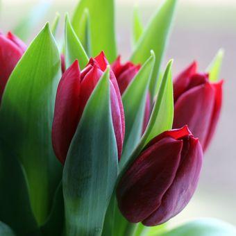 Tulipány...♥