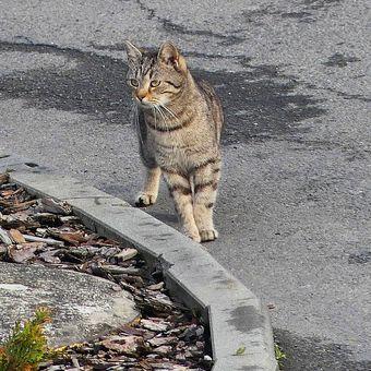 Zatoulaná kočka