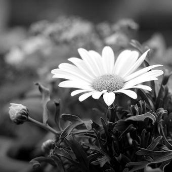 Kráska v zahradě... VII.