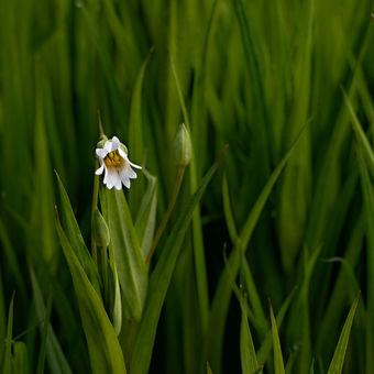 V zeleni jarního světa zatoulaná...