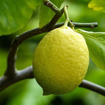 Citroník limonový