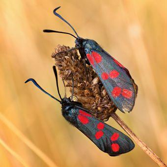Hmyzí soužití