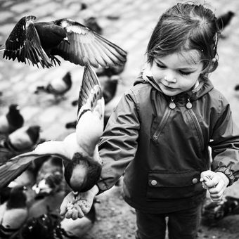 Jak se krmí holubi