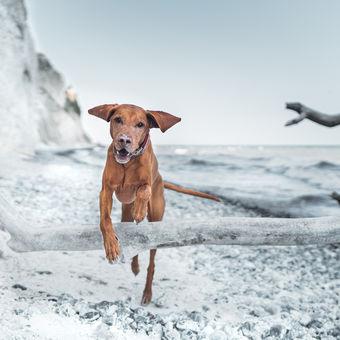 Pan Pes v Dánsku